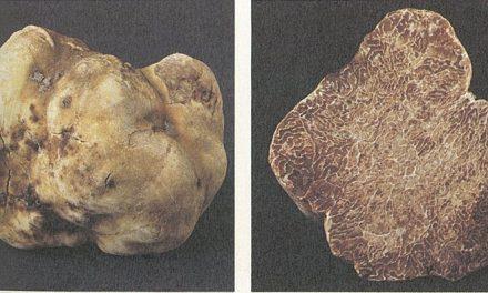 Какво представляват трюфелите?