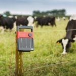 За какво служат електропастирите?